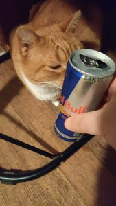 Rocky and Red Bull